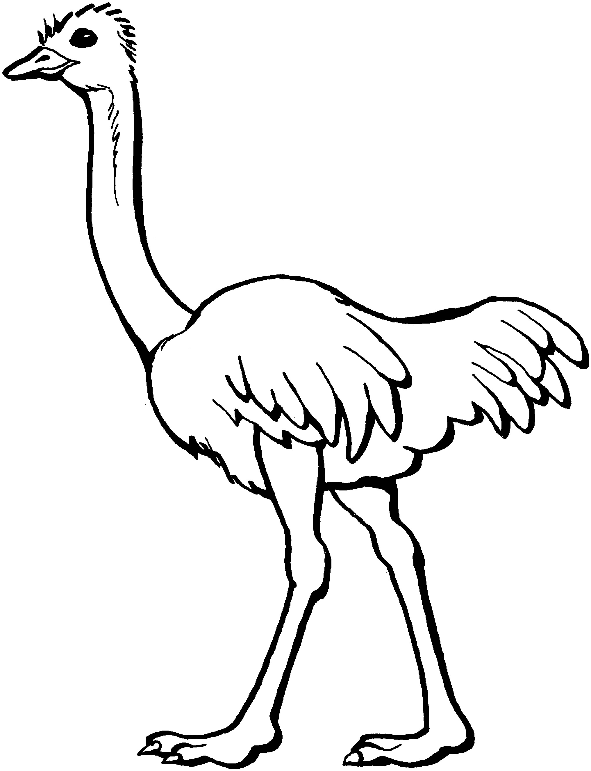 Free printable ostrich coloring pages for kids for Fun coloring pages for kids