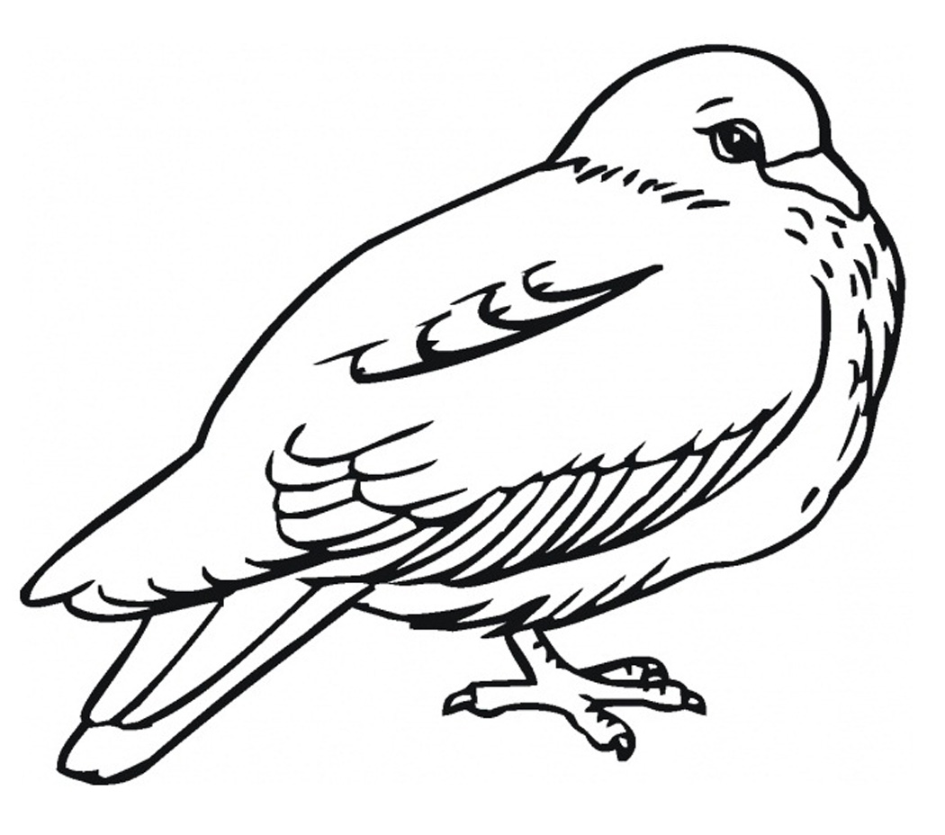 Free printable pigeon coloring pages for kids for Coloring page of a bird