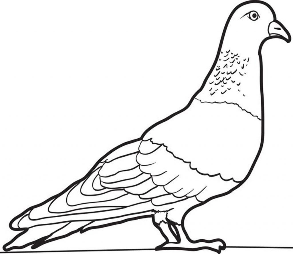 Pigeon Color Pages
