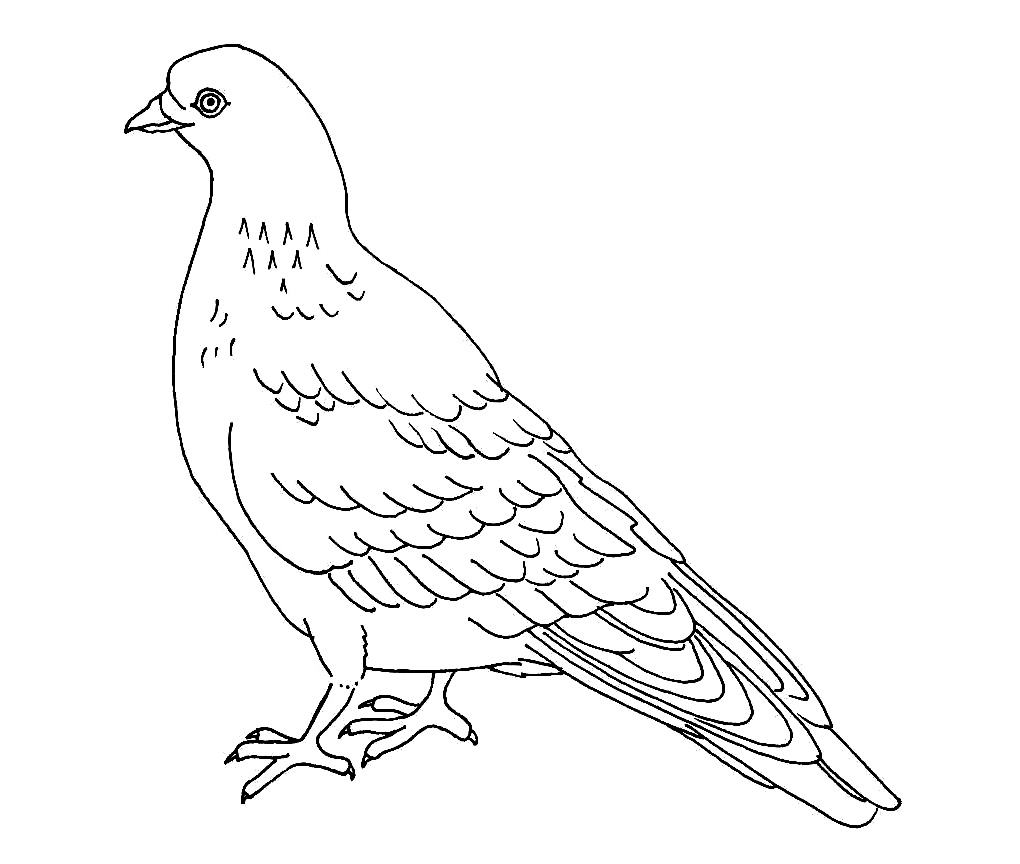 Pigeon Coloring Page