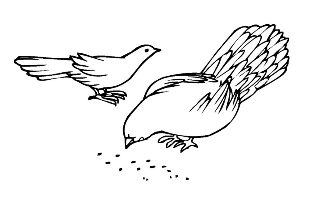Pigeon Coloring Pages Images