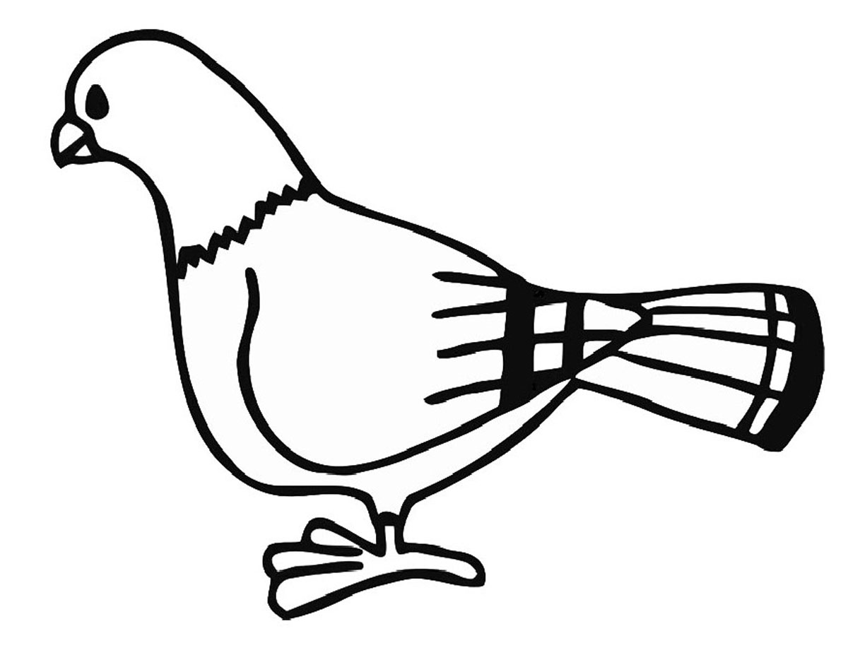 Attirant Pigeon Coloring Pages For Kids