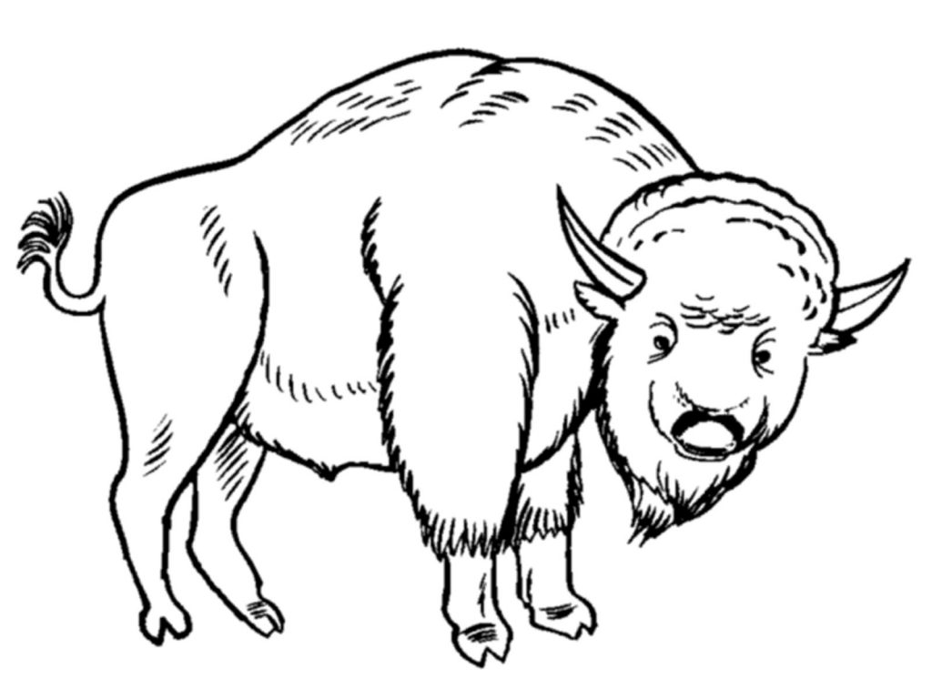 Printable Bison Coloring Pages