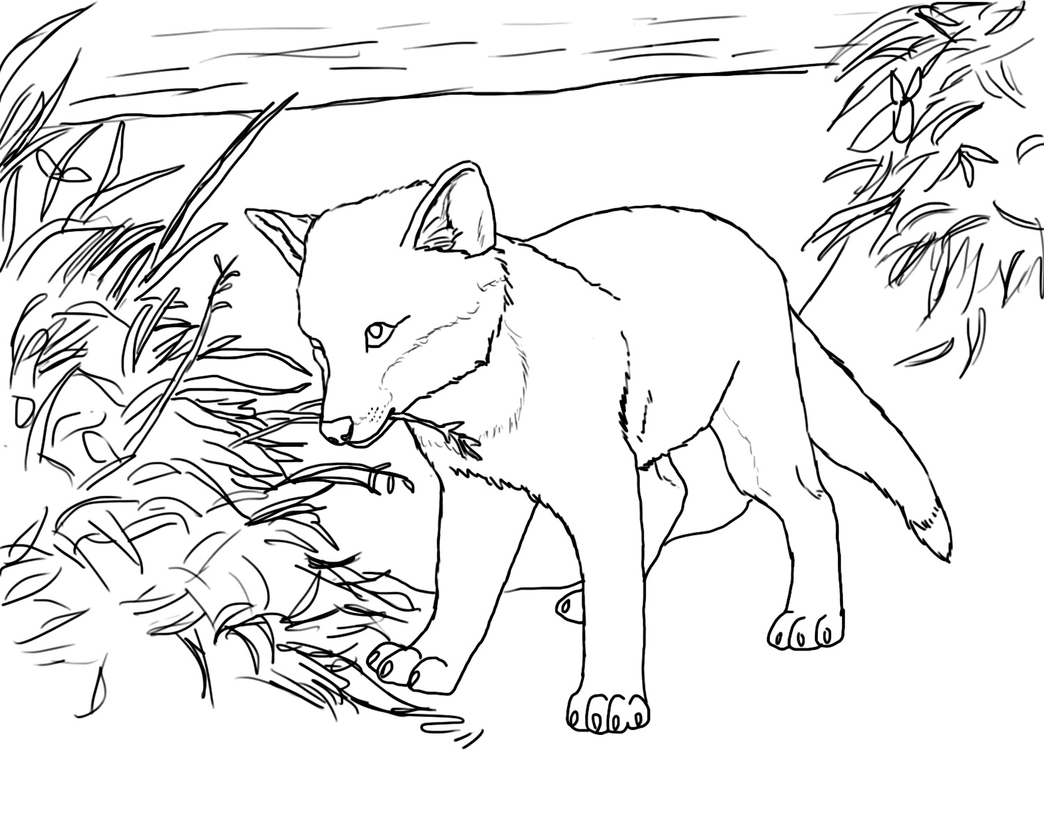 printable fox coloring pages - Baby Arctic Animals Coloring Pages