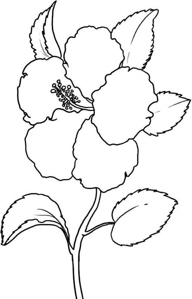 yellow hibiscus coloring pages - photo#7