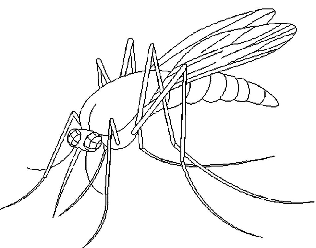 Printable Mosquito Coloring Pages
