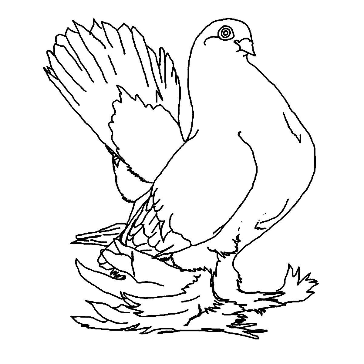 Charmant Printable Pigeon Coloring Page