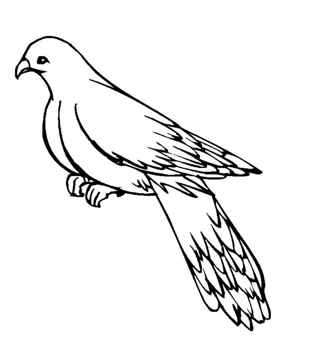 Printable Pigeon Coloring Pages