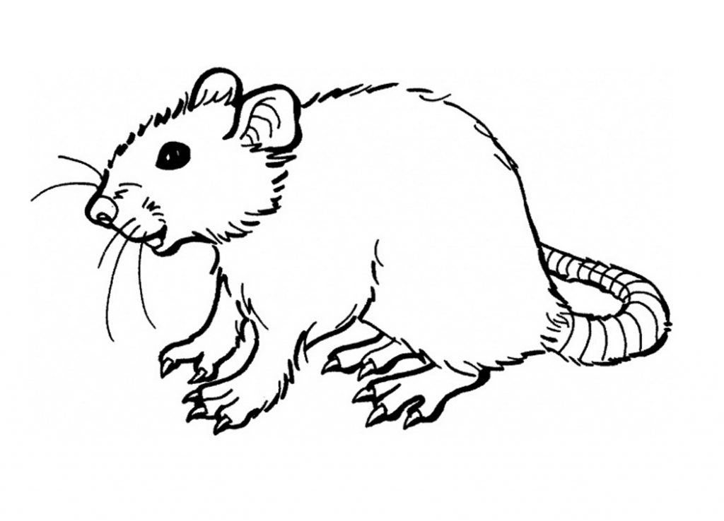 Coloring Pages For Youth : Free printable rat coloring pages for kids