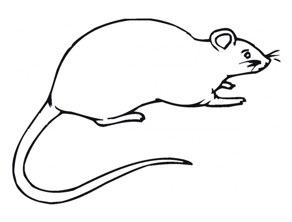 Rat Coloring Pages for Kids