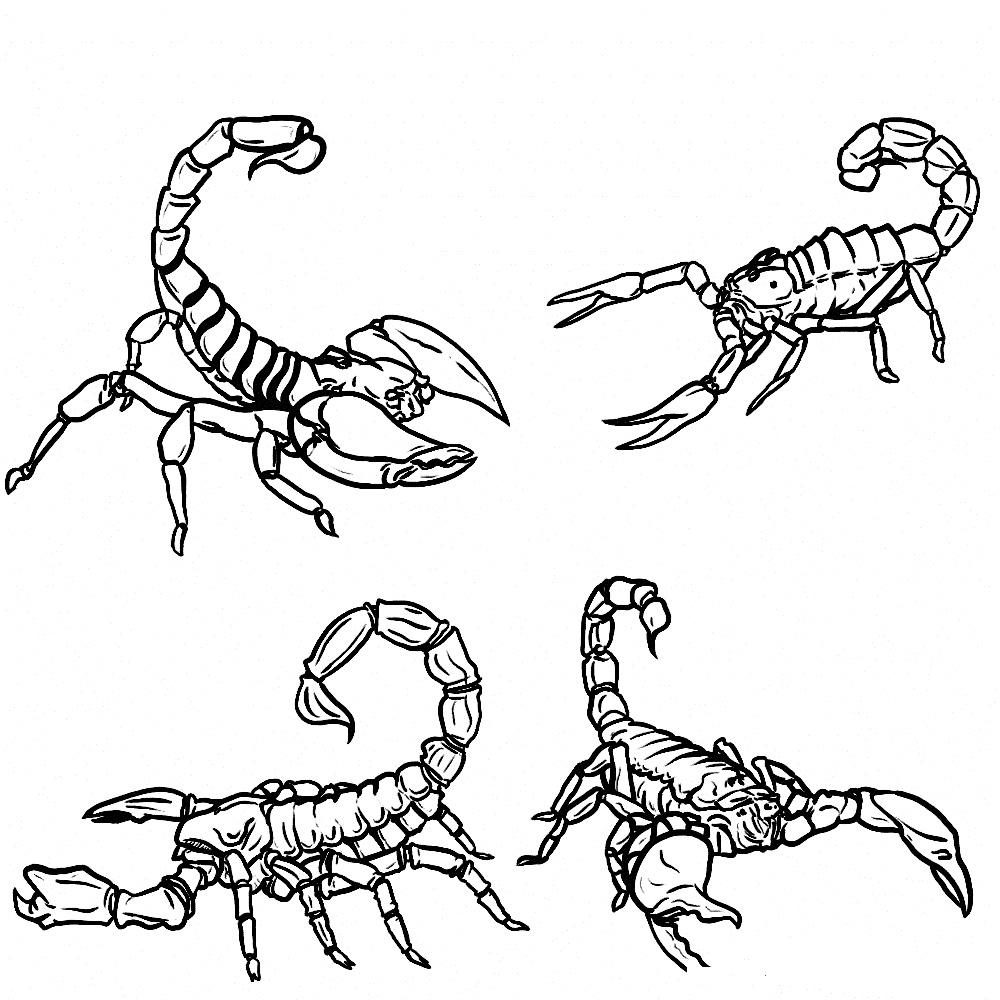 Scorpions Coloring Pages