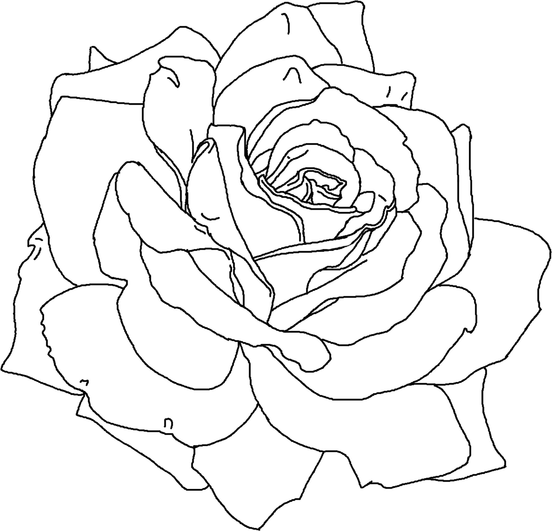 Line Drawing Of A Rose : Free printable flower coloring pages for kids best