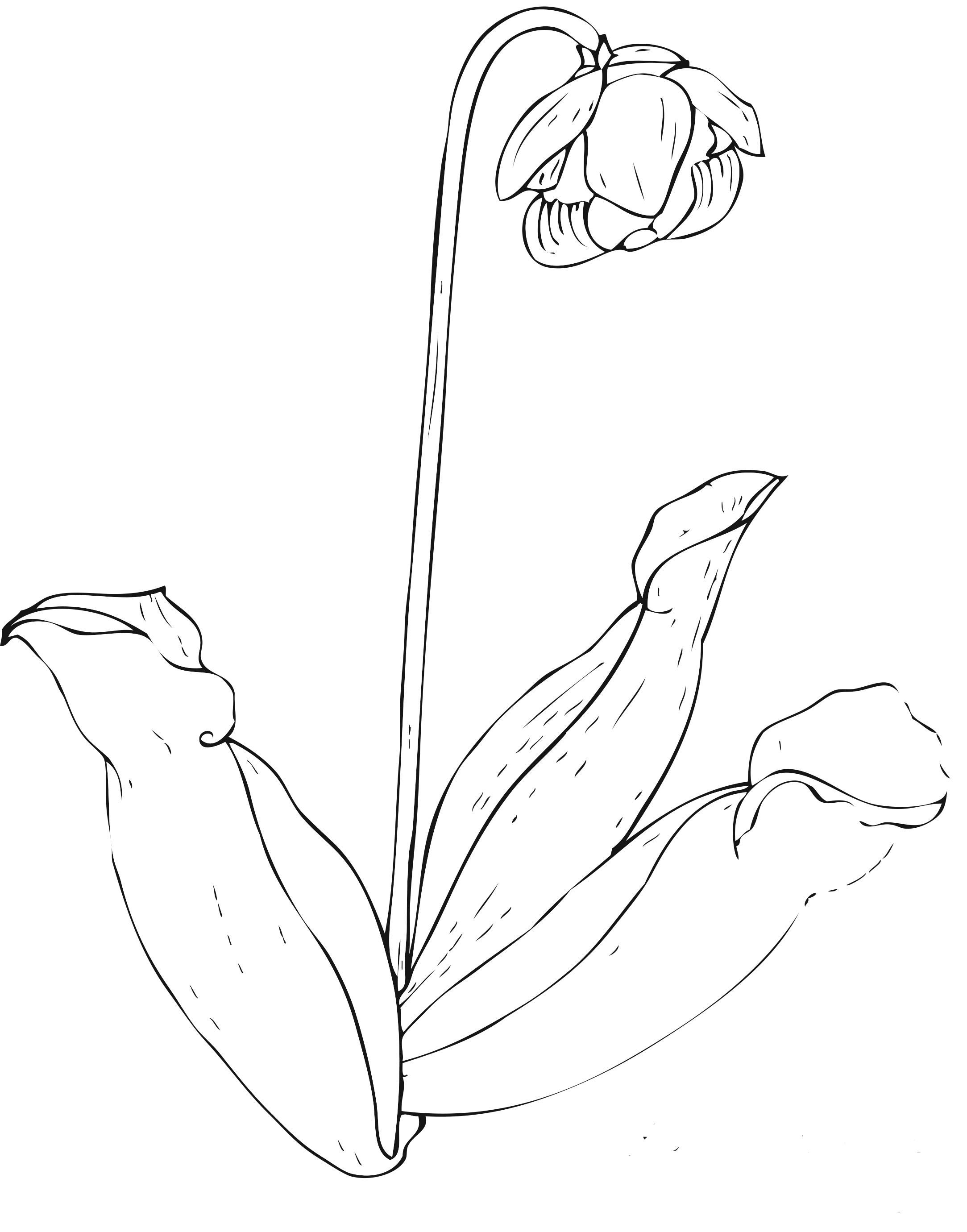 childrens coloring pages flowers - photo#43