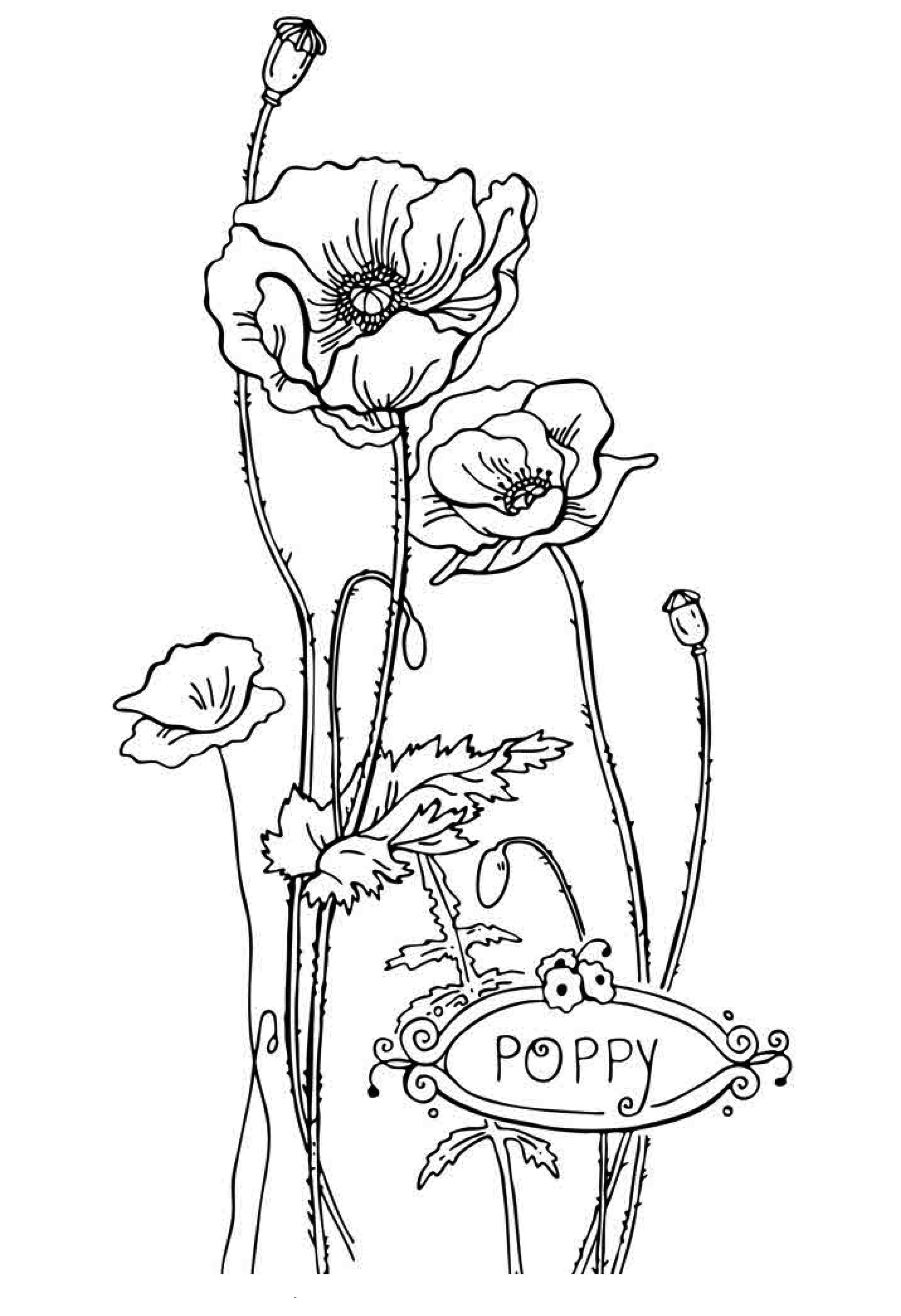 Free printable flower coloring pages for kids best for Poppy coloring page