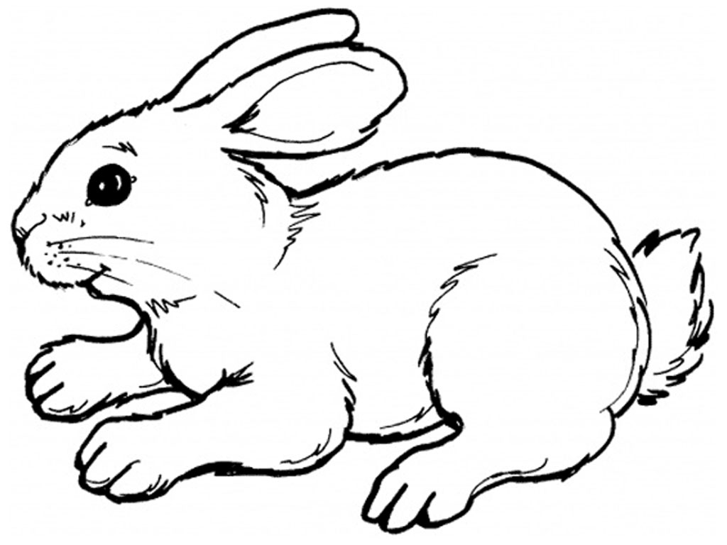 bunny coloring pages - Bunny Coloring Sheet