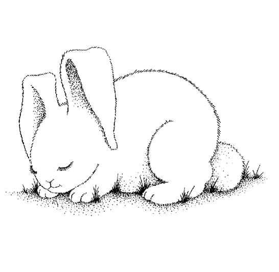 Print Free Bunny Coloring Pages