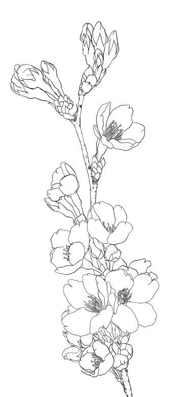Flower Outline Drawing : Coloring pages for teens best kids