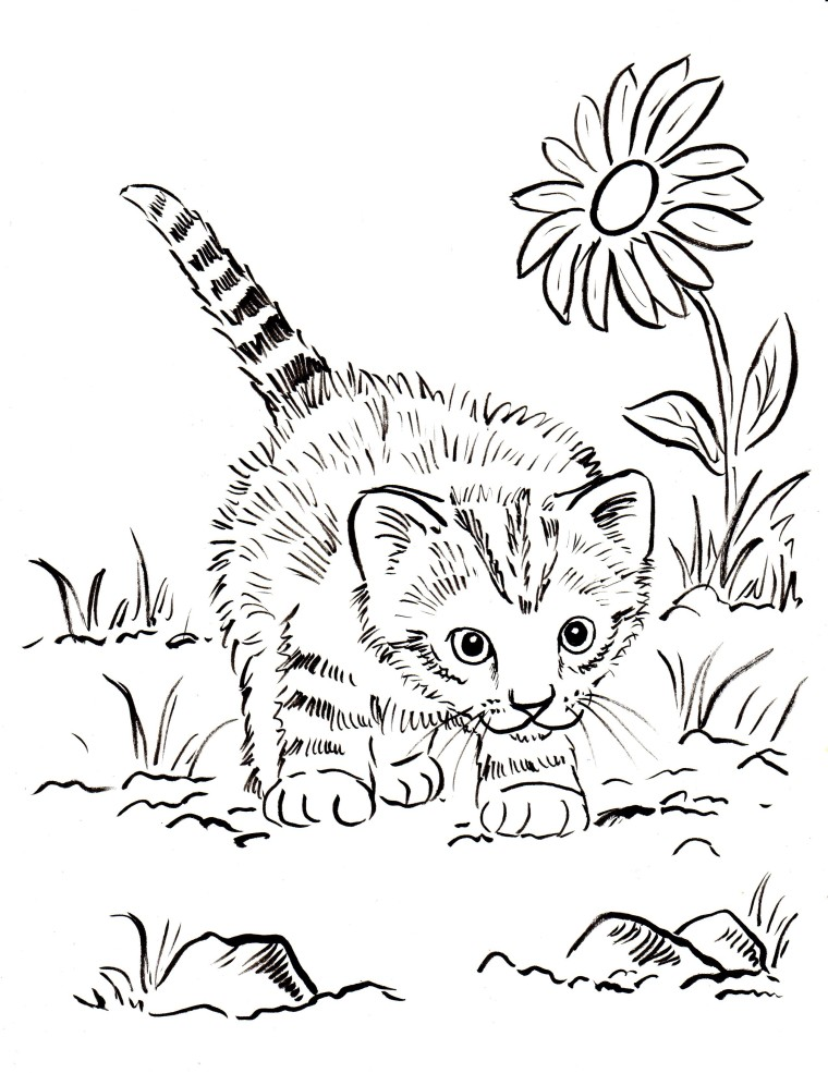 Kitten coloring pages best coloring pages for kids for Coloring pages of kittens to print