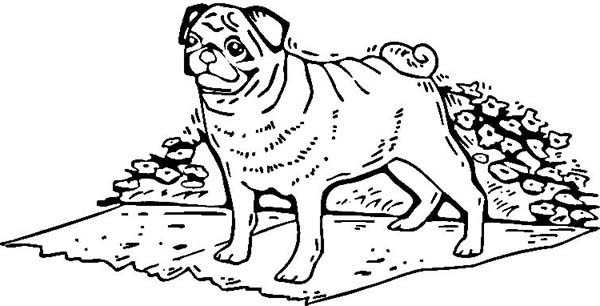 Download Free Pug Coloring Pages