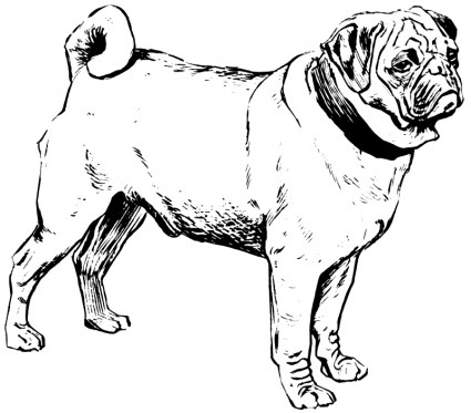 Download Pug Coloring Pages