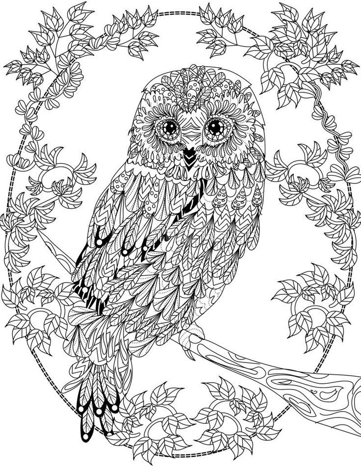 Owl coloring pages for adults free detailed owl coloring for Free printable coloring pages for adults and kids