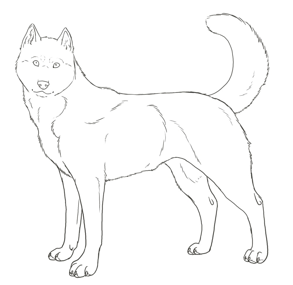 coloring pages huskys - photo#6