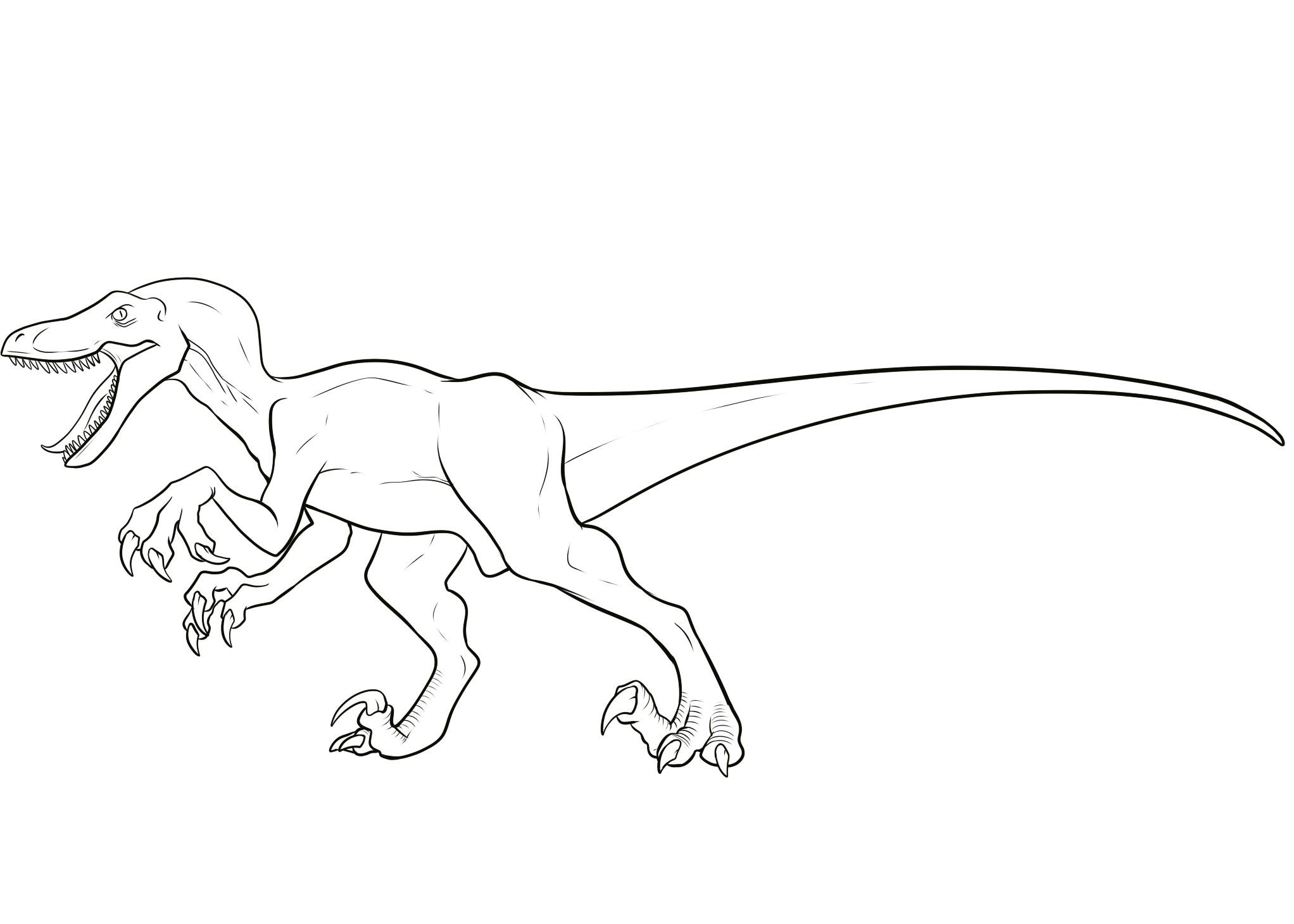 dinosaur raptor coloring pages - photo#13