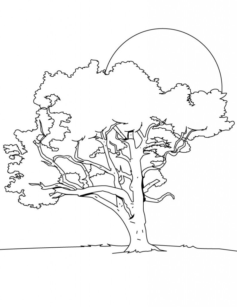 Coloring Pages of Trees