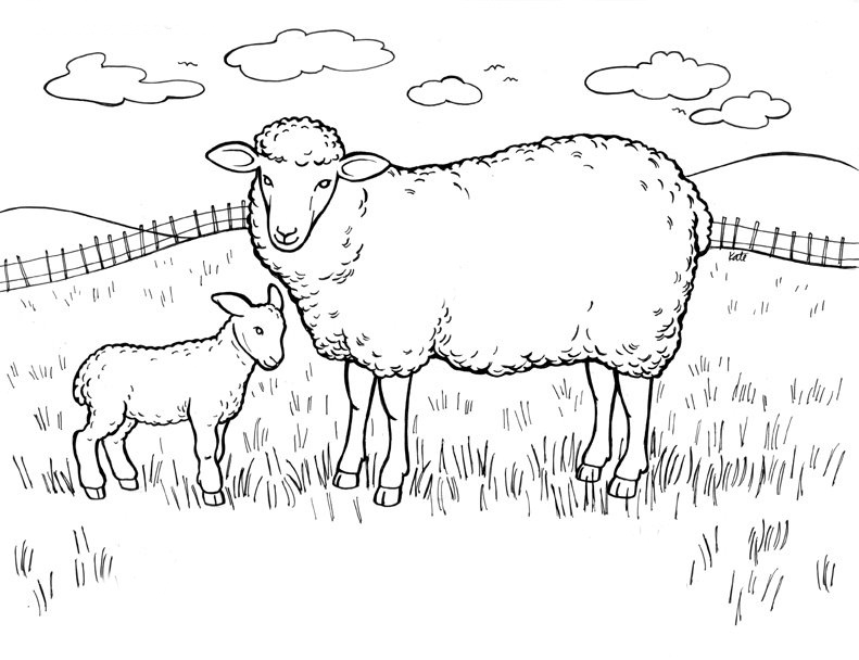 Sheep Coloring Page To Print
