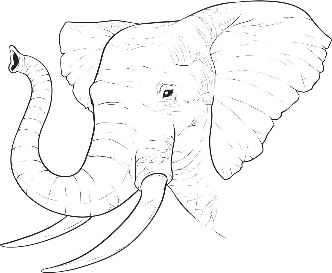photo about Printable Elephant Pictures named Absolutely free Printable Elephant Coloring Web pages For Little ones