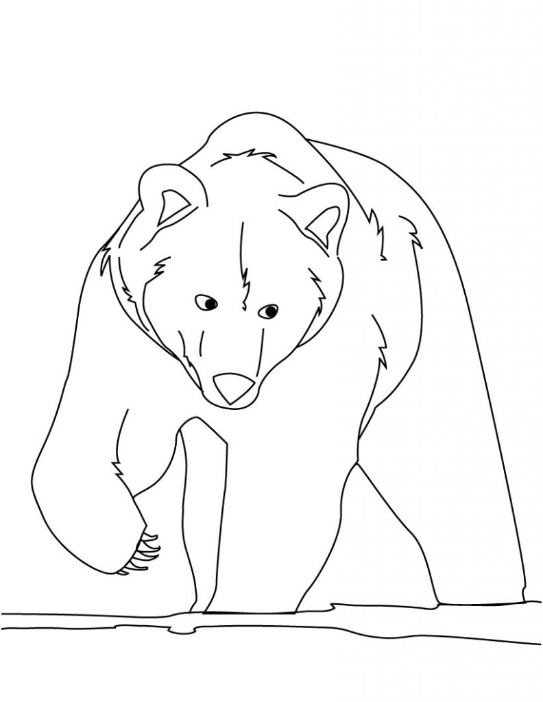 Big brown bear coloring pages ~ Free Printable Bear Coloring Pages For Kids