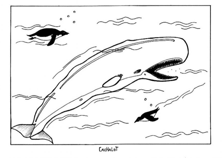 photo about Whale Templates Printable named Totally free Printable Whale Coloring Web pages For Youngsters