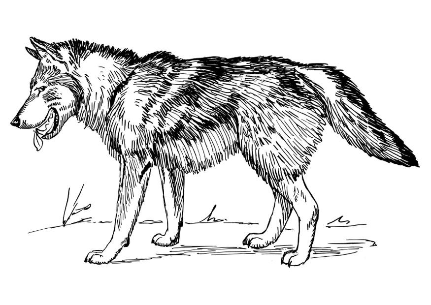 Big Bad Wolf Coloring Pages