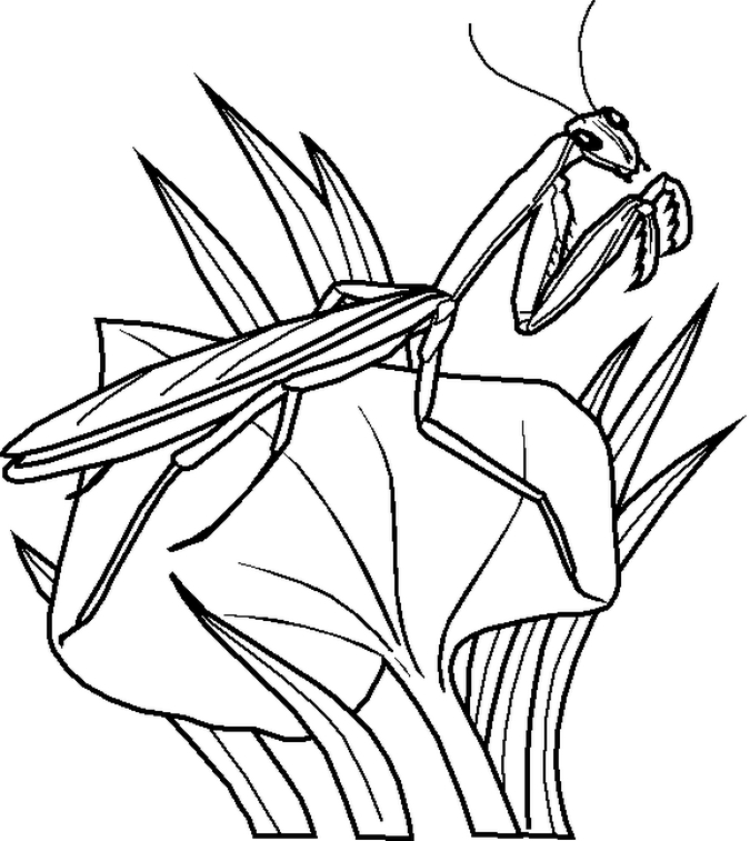 free printable bug coloring pages - photo#17
