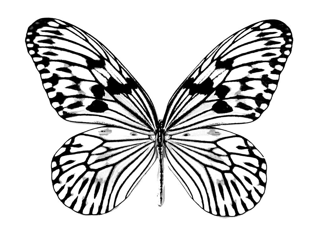 free butterfly coloring pages - photo#32