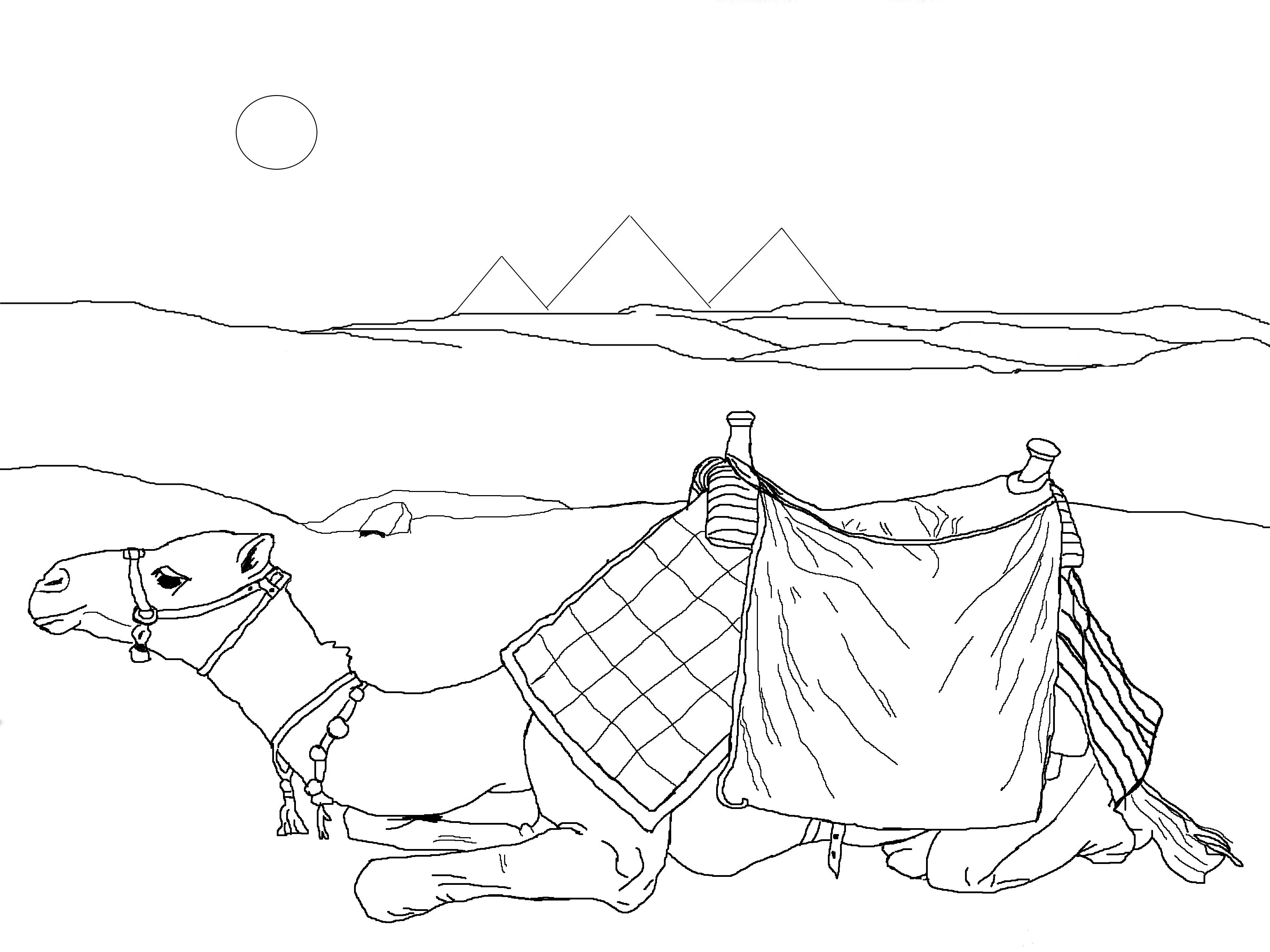 Camel Coloring Pages Kids