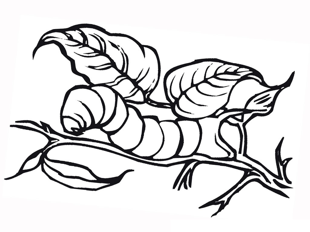 Caterpillar Coloring Pages Photos