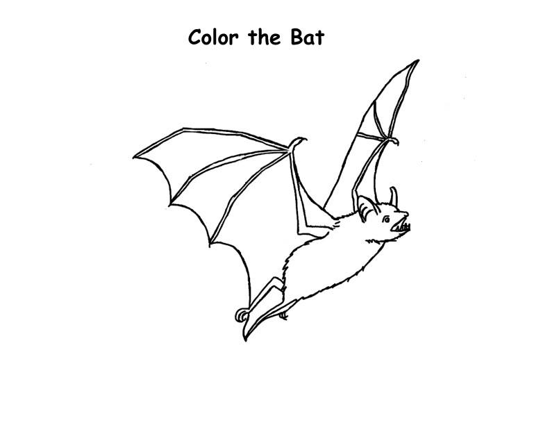 Coloring Page Bat