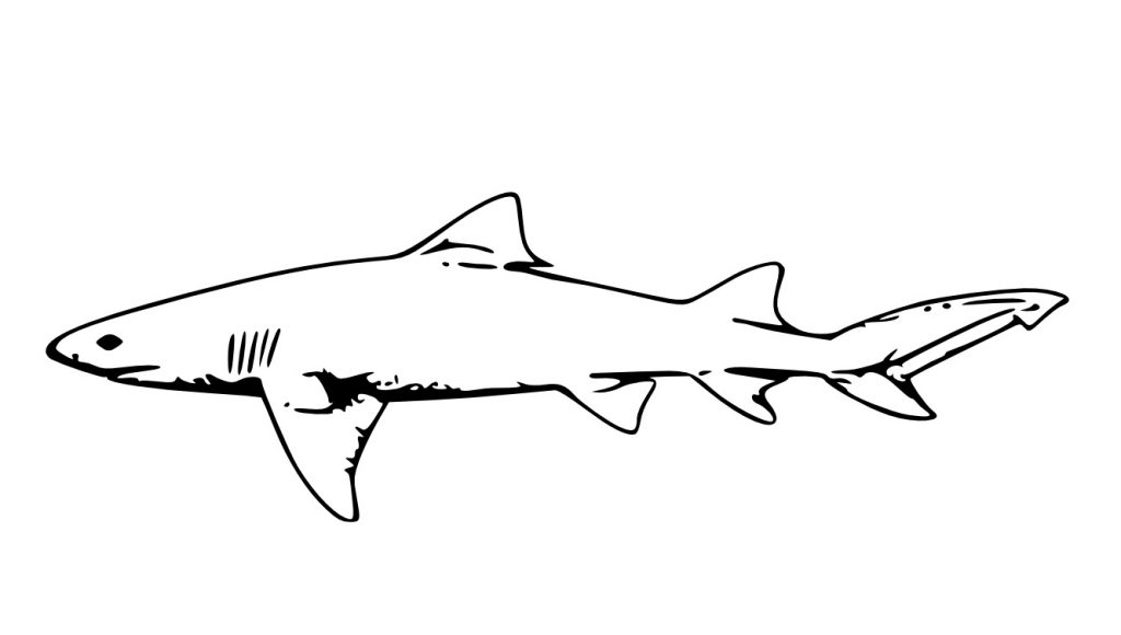 Sharks In The Sea Coloring Pages
