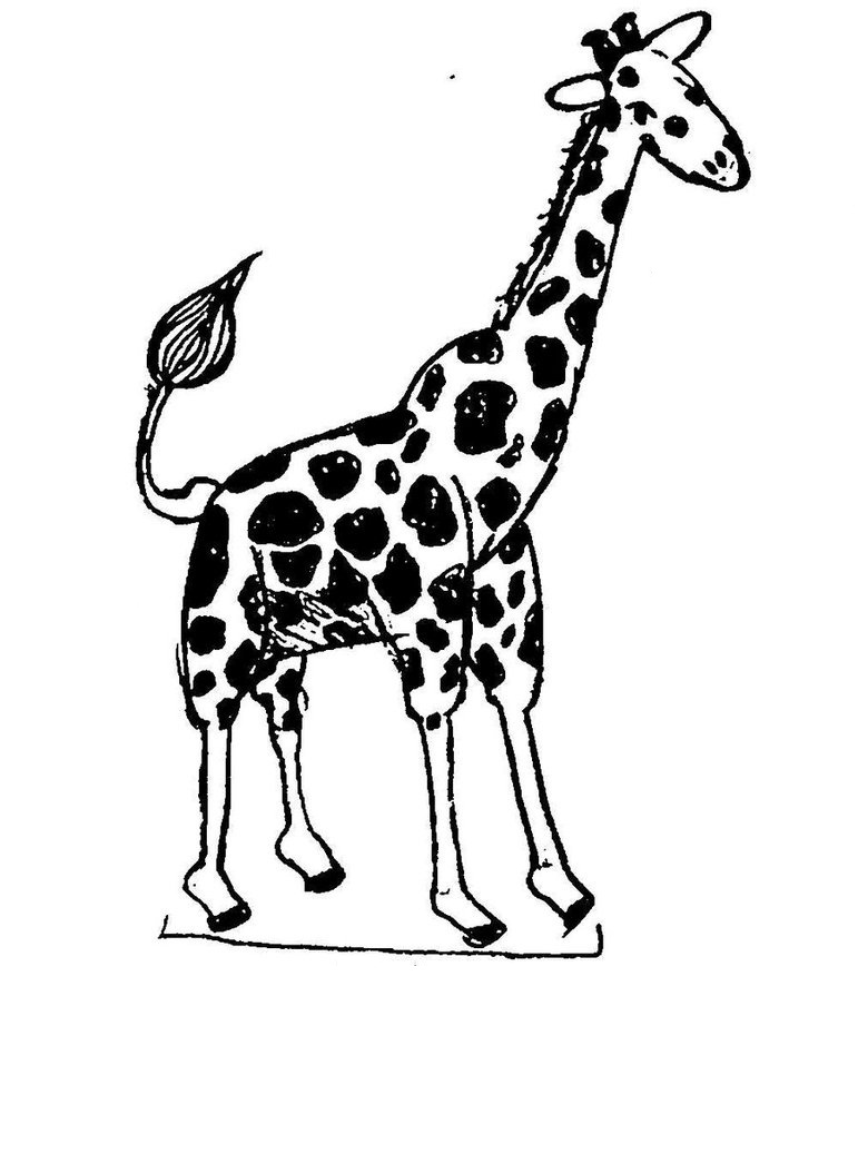 picture relating to Printable Giraffe Pictures referred to as Free of charge Printable Giraffe Coloring Internet pages For Little ones