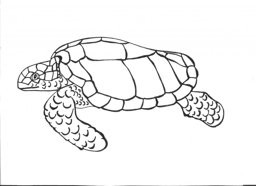 Coloring Pages Sea Turtle