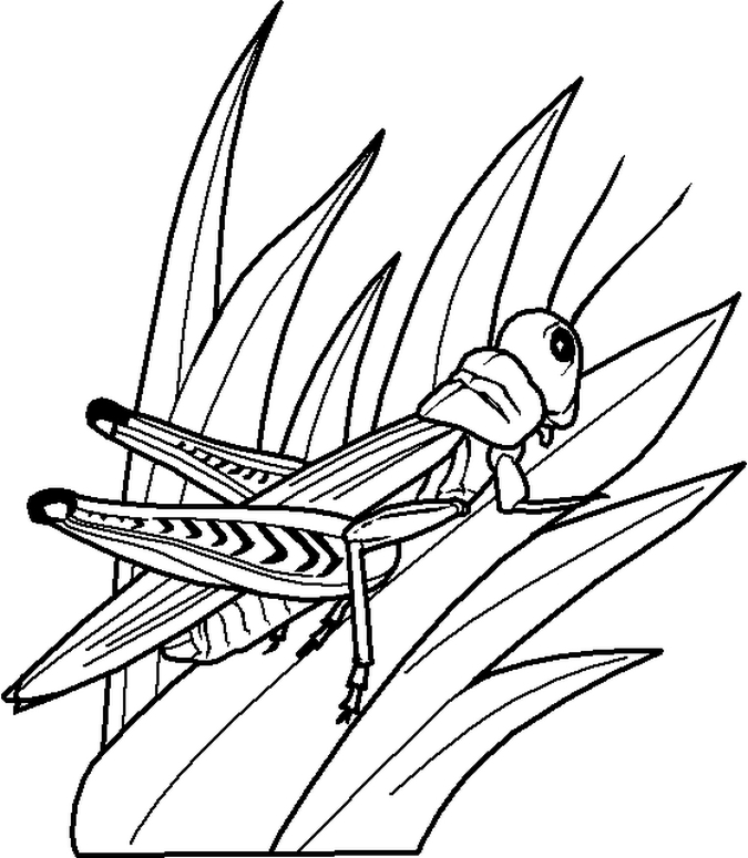 Coloring Pages of Bugs