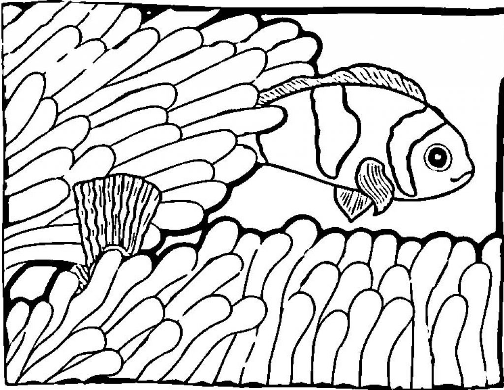 Coloring Pages of Fish For Kids