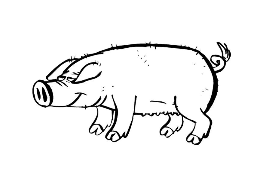 Coloring Pages of Pigs For Kids