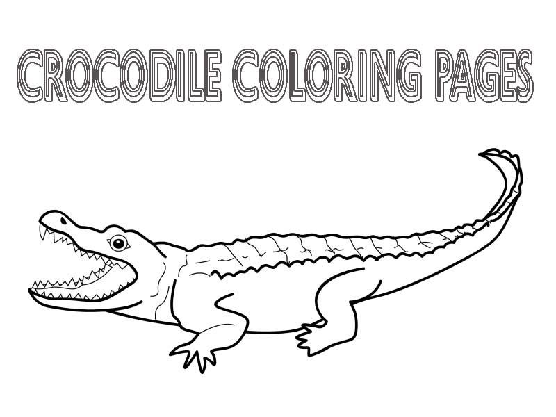 Crocodile Color Page