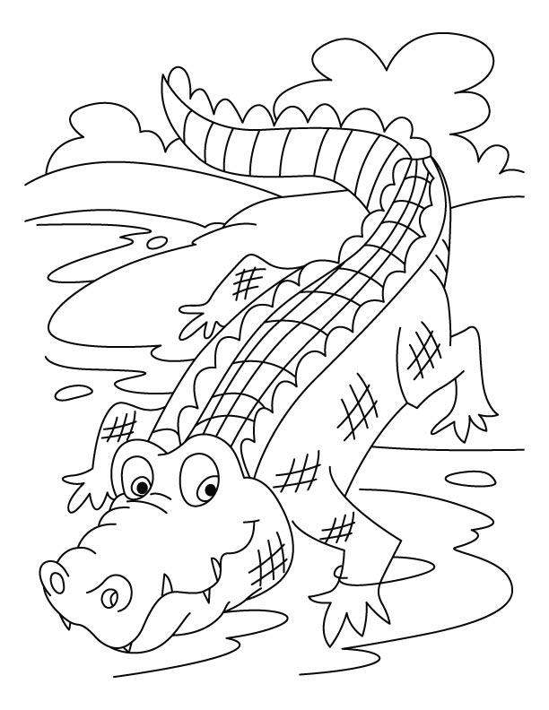 Crocodile Color Pages