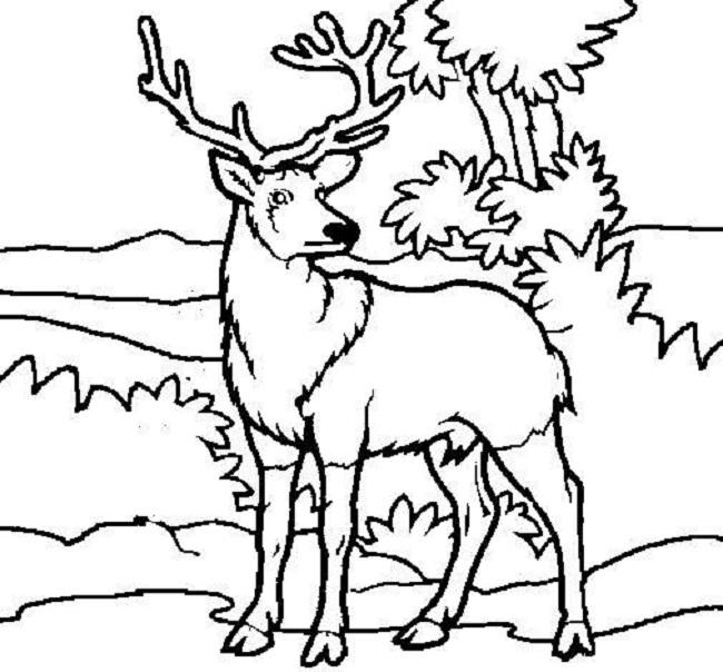 Deer Color Pages
