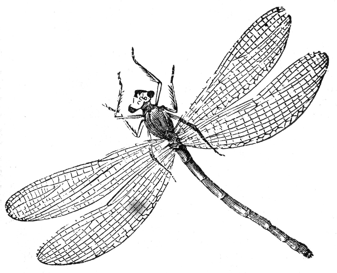 photo regarding Dragonfly Printable titled Totally free Printable Dragonfly Coloring Webpages For Small children
