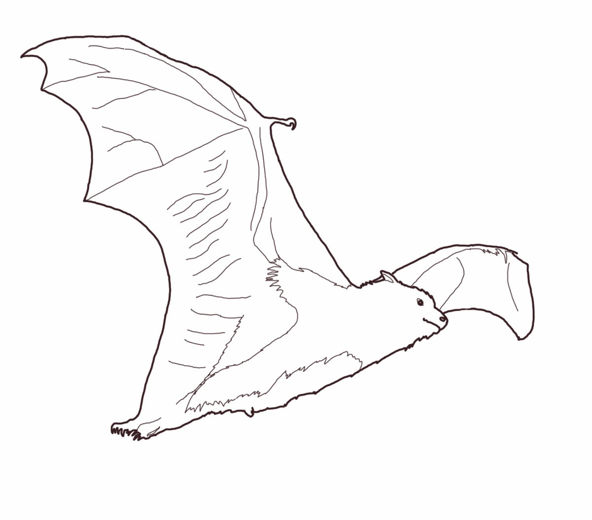 Flying Bat Coloring Pages