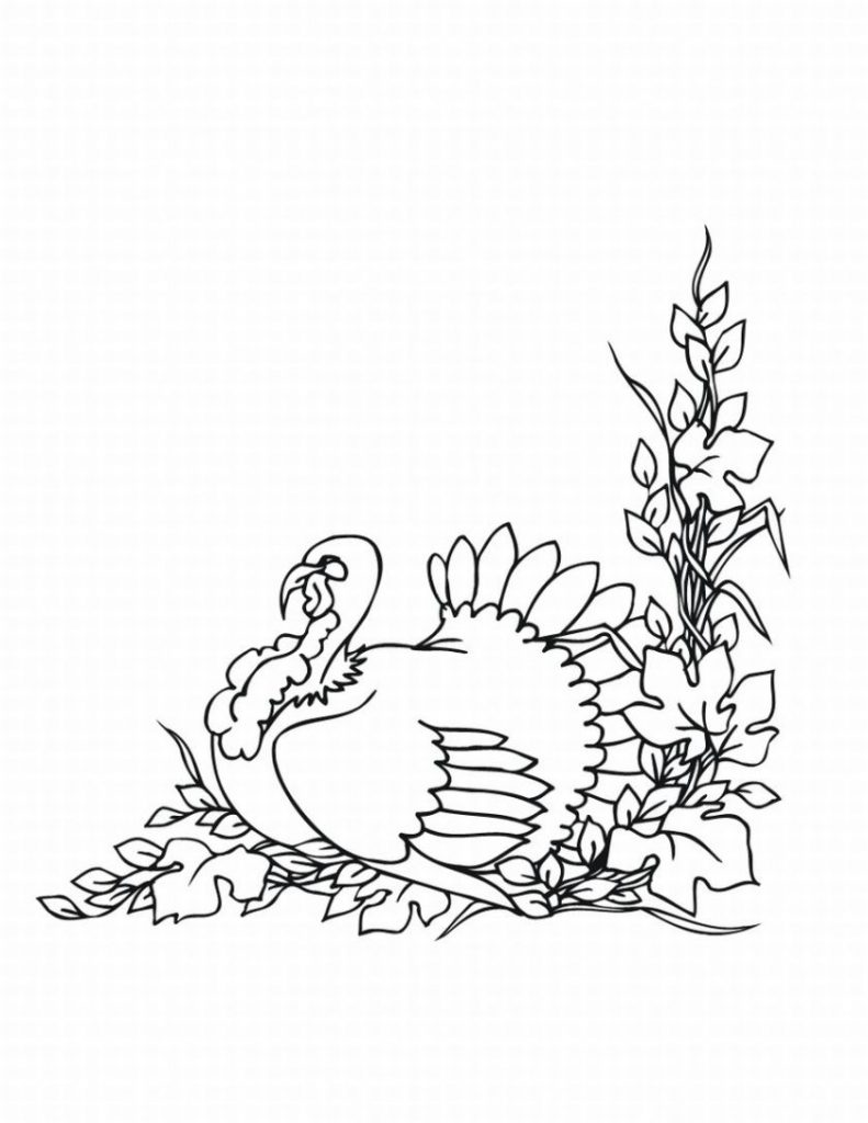 Free Turkey Coloring Pages For Kids